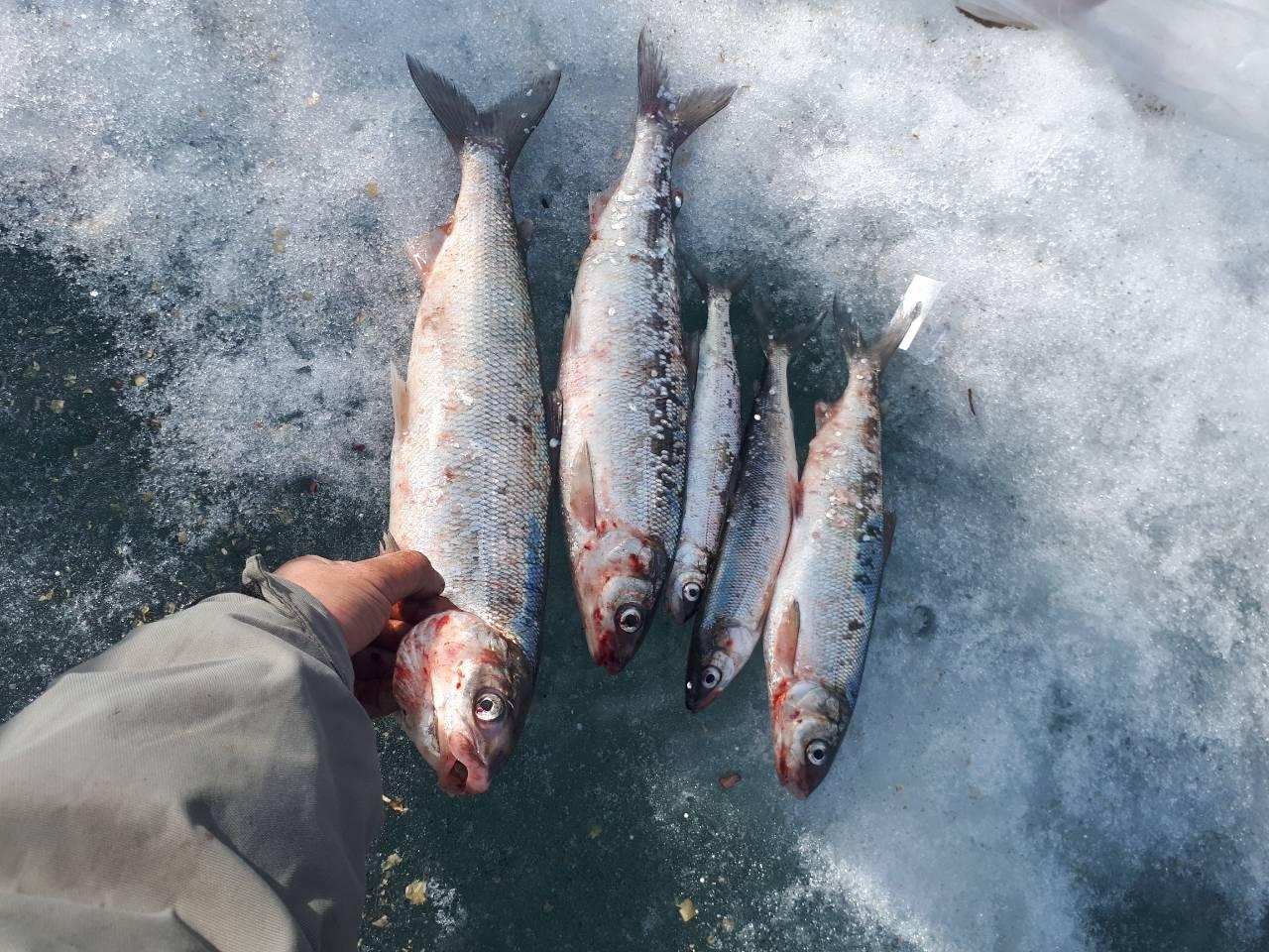 Выходные рыбака - Туры на Байкал